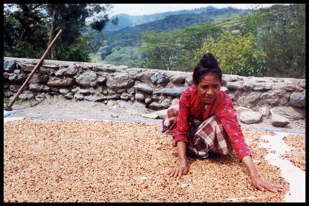 essays on fair trade coffee The fair trade certified coffee movement exists today to ensure that the small   essay by smr806, high school, 11th grade, a+, january 2004.