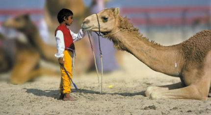 275 Words Essay for Kids on the camel