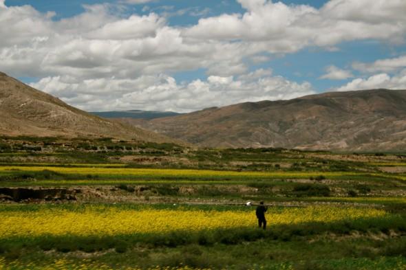 tibetan-fields-590.jpg