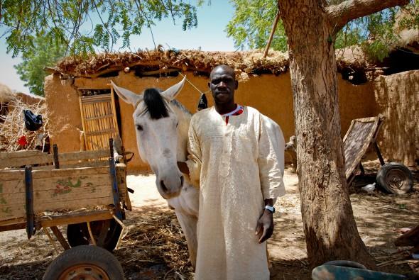 horse-trader-590.jpg