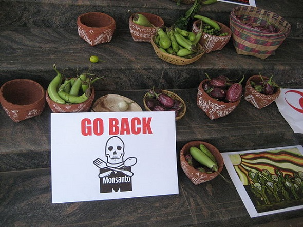 08.09.2016-Brinjal-Bangalore-Go-Home-Monsanto-590.jpg