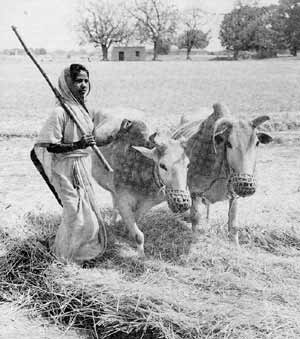 A census counts a man's cattle, but not the hours his wife spends tending them.