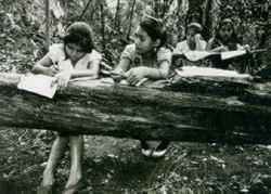 Humane education: resting on trees, the children take their lessons in the forest.