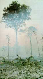Mists of devastation in the Brazilian Amazon. Whose growth? Whose benefits?