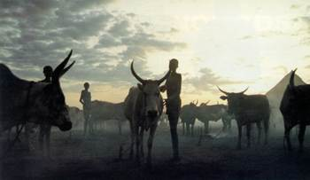 Nightfall at a Nuer cattle camp in southern Sudan: Government planners tend to dismiss nomads as both inefficient and backwards.
