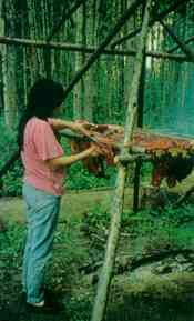 The woman is drying moose meat by the traditional method - part of an endangered way of life.