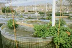 What goes around comes around: floating vegetation feeding on sewage in the Bear River.