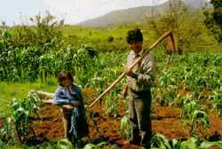 Peasant farmer on his maize plot in Chiapas, Mexico: a language that disappears is like a species that disappears.