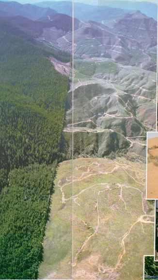 Daniel Dancer's aerial shot shows the impact of clearcutting in California: the battle to preserve the ancient forests is not confined to the Majority World.
