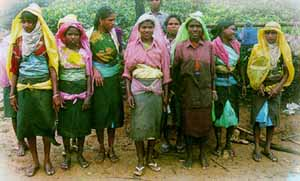Owning up: tea pickers - normally women - on the estate bought by the adivasis themselves to export tea to other poor communities.