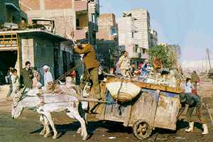 Valued at last: the Zaballeen waste recyclers of Cairo.