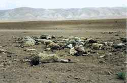 Blasted land: the remains of a flock of sheep and a sheepdog, killed along with a family of six by a US pilot on 30 April.