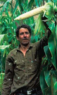 With improved soil, this Honduran farmer has no need to slash and burn new areas of rainforest.