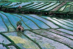 The rice fields of South East Asia, one of the wonders of the world. It takes deep understanding to shape these landscapes.