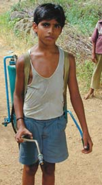 Burden of debt: The pesticide this boy carries on his back is bought on credit from moneylenders.