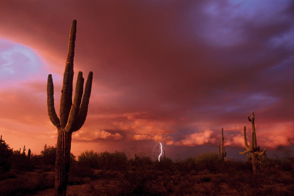 Approaching storm, Arizona, US Scientists believe that higher global temperatures will result in more 'extreme weather events' such as storms, floods and droughts. The nine hottest years since records began all occurred in the 1990s and 2000s. Photo: Gene Rhoden / Still Pictures