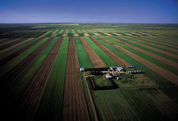 Wheat farm, Great Plains, Montana, US Monoculture on massive mechanized farms has contributed to major soil erosion in the US. In the 20th century the US lost an amount of topsoil that took about 1,000 years to form. Photo: Alex A Maclean / Still Pictures