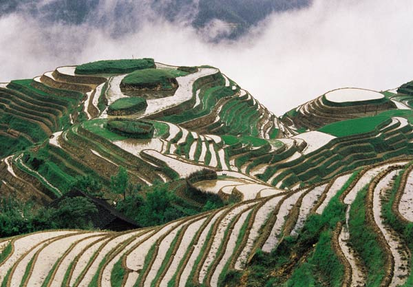Rice terraces, Guangxi Province, China Rice terraces are found in the mountainous parts of southern China. The Dragon's Backbone Terraces were built from the Yuan Dynasty to the beginning of the Qing Dynasty. So they have been around for hundreds of years – an early example of human management of the landscape. Photo: Xintian Pan / UNEP / Still Pictures