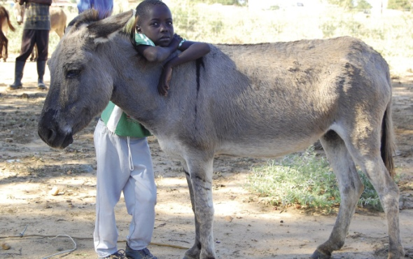 2013-09-02-horse-590.jpg [Related Image]