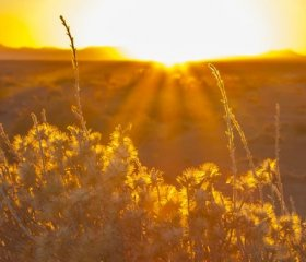 Photo by Bureau of Land Management New Mexico