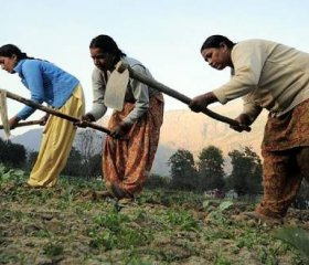 Credit: Neil Palmer (CIAT). Women farmers at work in their vegetable plots near Kullu town, Himachal Pradesh, India.