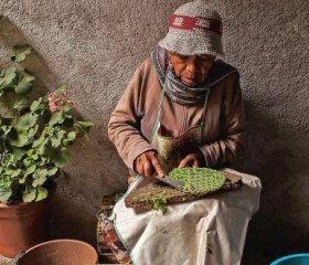 Socorro Aguilar de-spines a cactus pad in Real de Catorce, Mexico. She likes to cook it up with onions, tomato and chillies or drink it in smoothies.