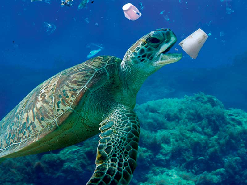 19_I_NI516_Tortoise.jpg