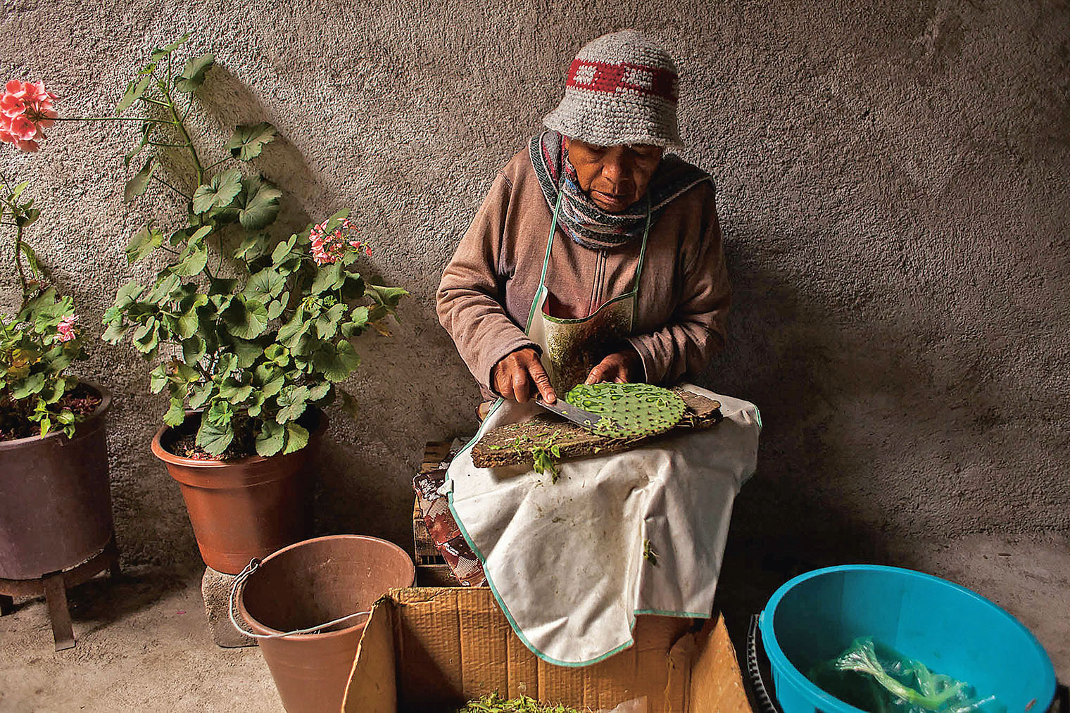 Socorro Aguilar de-spines a cactus pad in Real de Catorce, Mexico. She cooks it up with onions, tomato and chillies or drinks it in smoothies. Photo: Antonio Cascio